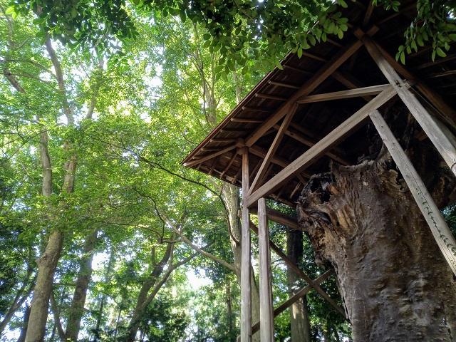 中氷川神社の御神木