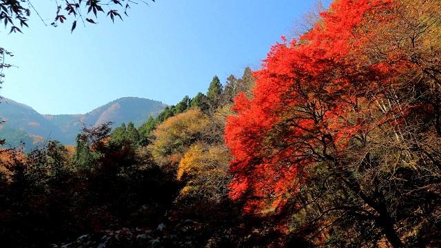 神戸岩 紅葉